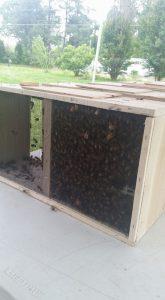 we-got-bees