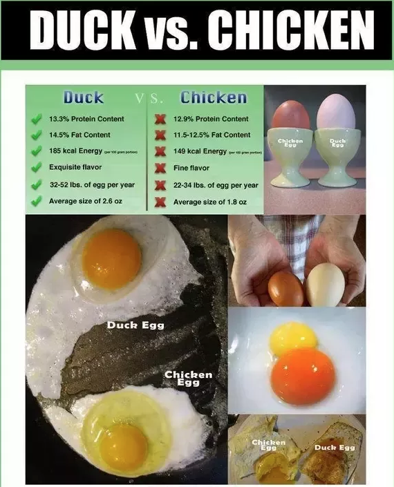 Duck egg comparison image.