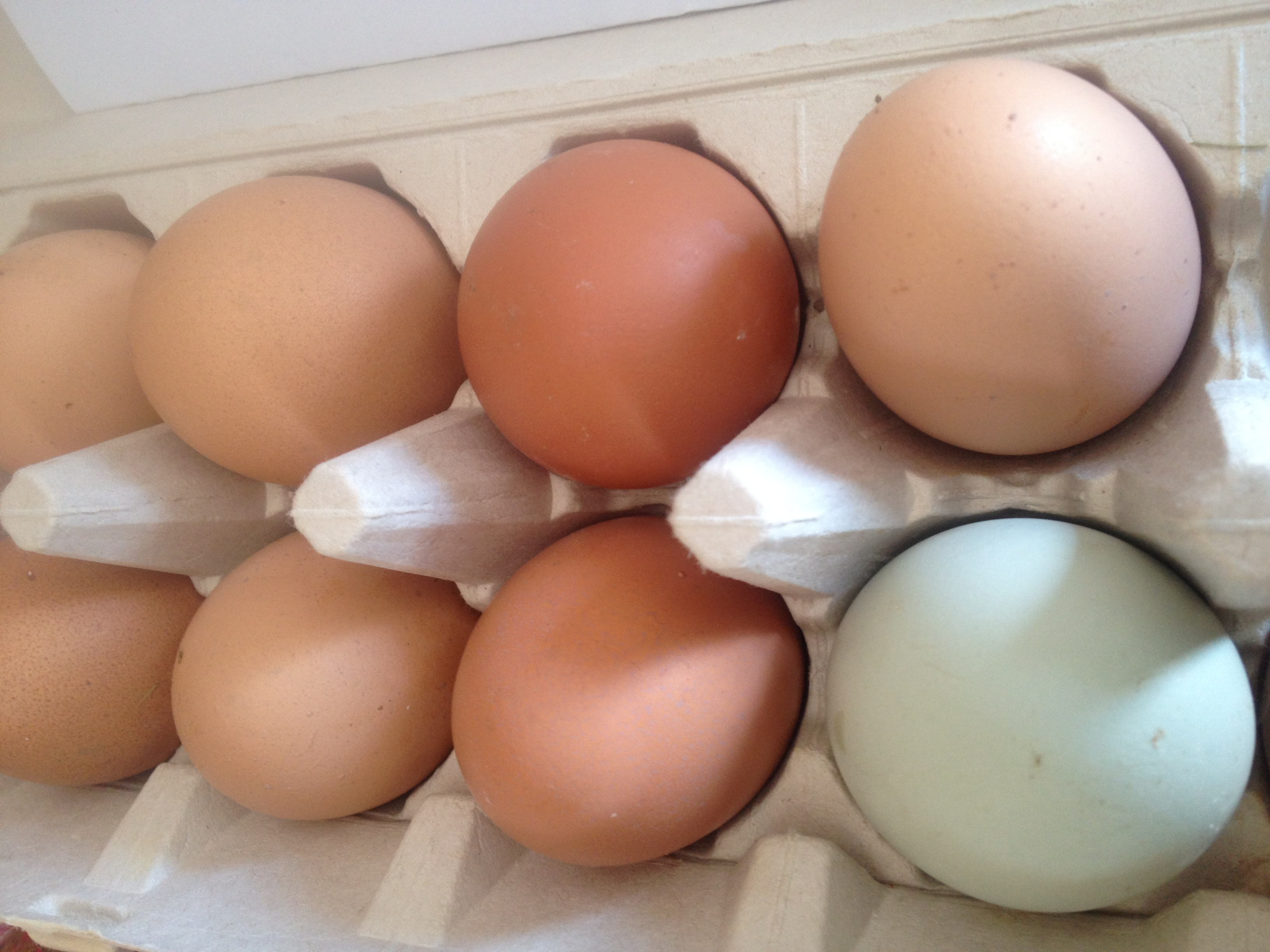 Beautifull Naturally Colored Eggs